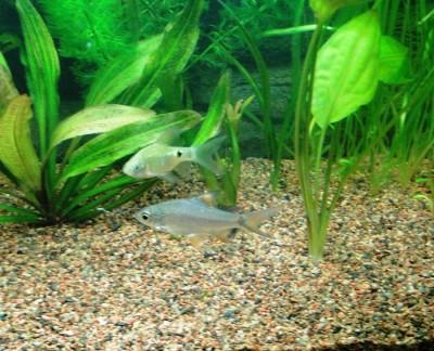Мой аквариум 100 литров НастенА  - 060.jpg