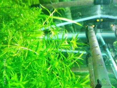 Опознание аквариумных растений - 1606036879890.jpg