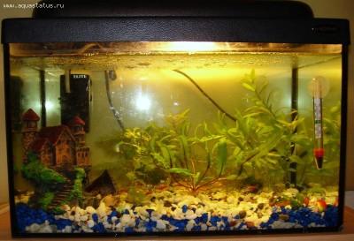 Молоденький аквариум - 001.JPG
