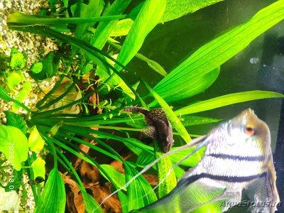 Опознание аквариумных растений - 1608273220995.jpg