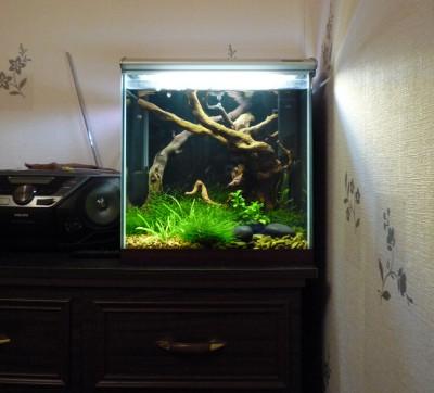 Пресноводный мини аквариум на 30 литров Roman  - aquar2.JPG