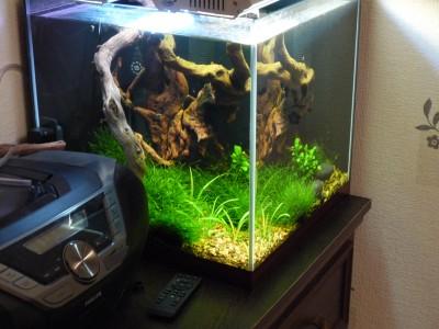 Пресноводный мини аквариум на 30 литров Roman  - aquar.JPG