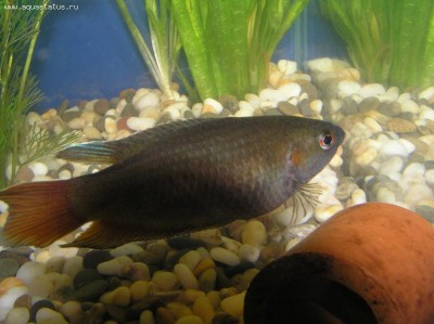 Помогите опознать рыбку опознание рыб  - P1010006.JPG