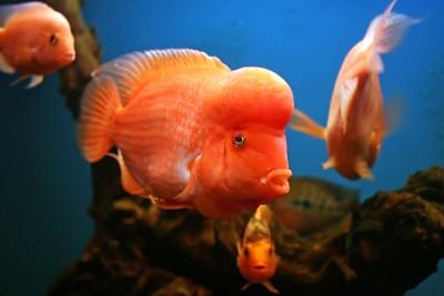 Помогите опознать рыбку опознание рыб  - IMG_7279.jpg