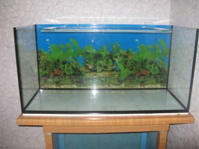 Запускаю аквариум на 200 литров - IMG_1049.jpg