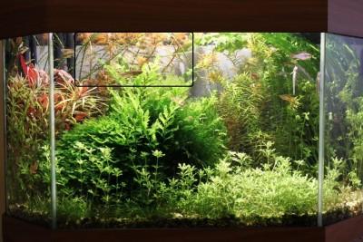 Мои аквариумы Алексей7  - IMG_0162 - копия.JPG