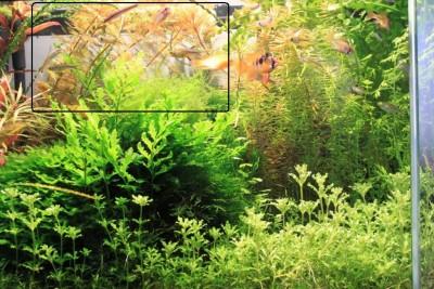 Мои аквариумы Алексей7  - IMG_0033 - копия.JPG