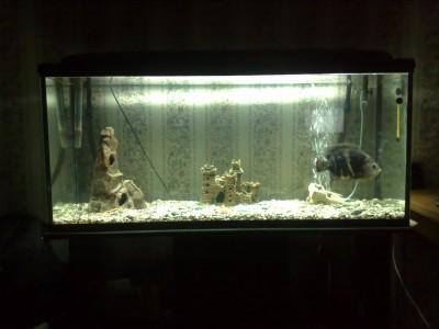 Мой аквариум 350 литров baldab  - 27032010324.jpg