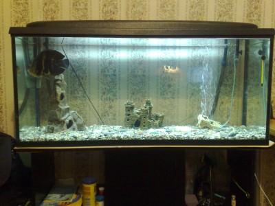 Мой аквариум 350 литров baldab  - 27032010322.jpg