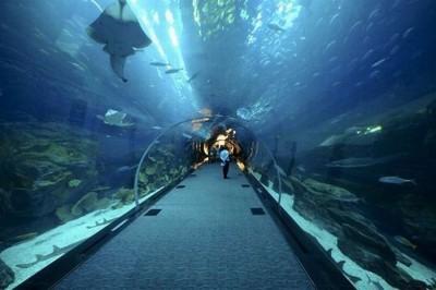 Интересные аквариумы со всего мира - dubai_mall_06.jpg