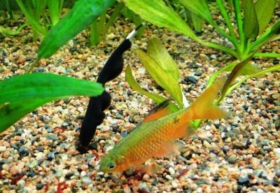 Мой аквариум 100 литров НастенА  - 003.jpg
