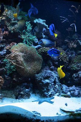 Мои морские аквариумы Илья  - i2.JPG