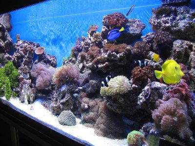 Мои морские аквариумы Илья  - i3.jpg