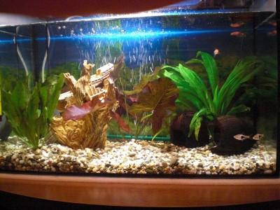 Мой аквариум 60 литров алек  - 1.JPG