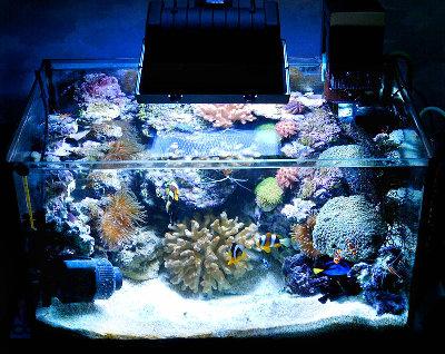 Мои морские аквариумы Илья  - i5.JPG