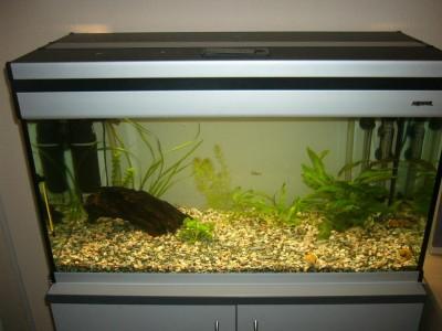 Мой аквариум 110 литров alexset  - P1050205f.jpg