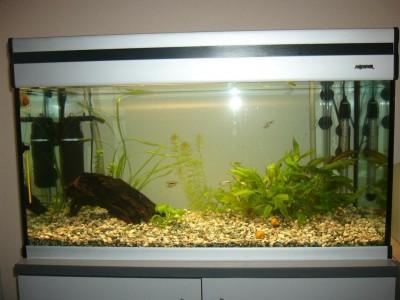 Мой аквариум 110 литров alexset  - P1050207f.jpg