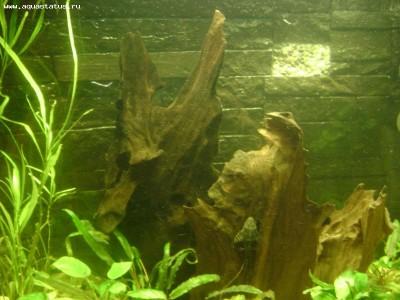 Коряга в аквариуме - Изображение 695.jpg