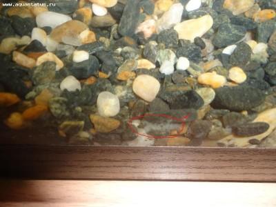 Это остатки в грунте , маленько просифонил грунт и на грунте меньше стало - DSC01203.JPG