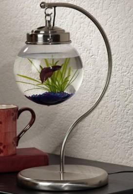 Интересные аквариумы со всего мира - jlk1qzu2az1a6g3j.jpg