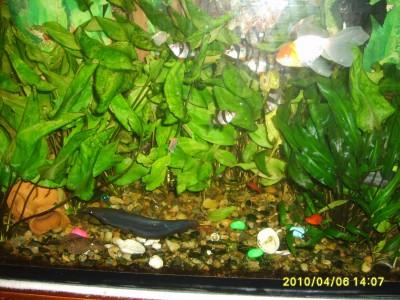 Мой аквариум 200 литров DRED  - S5001918 1.jpg