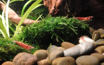 Ещё один аквариум 30 литров Студентка  - 032.jpg