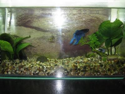 Планируемый аквариум для петушка - IMG_1154.JPG