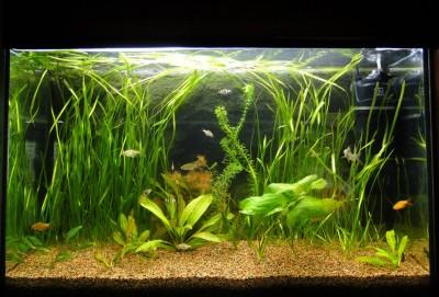 Мой аквариум 100 литров НастенА  - 004.jpg