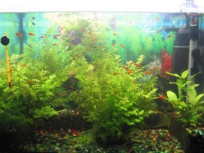Мой аквариум 80 литров лёва  - IMG_1092.jpg