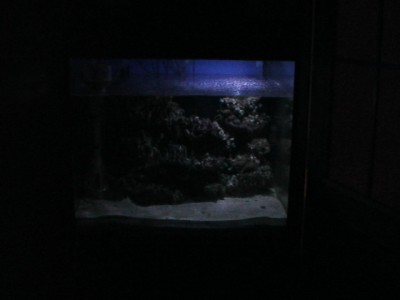 Ночная подсветка аквариума - 290733128.jpg