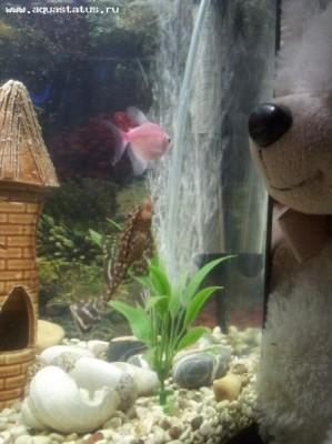 Помогите опознать рыбку опознание рыб  - y_9212f373.jpg