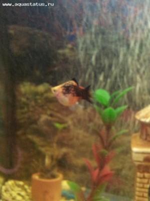 Помогите опознать рыбку опознание рыб  - 20120201_202631.jpg