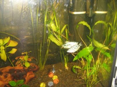 Мой аквариум 50 литров Mirra  - 030 (2).jpg
