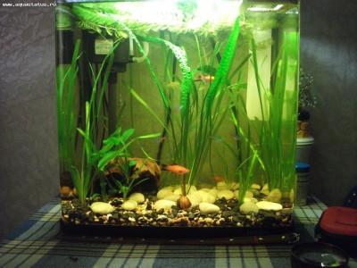 Доработка аквариума Jebo R138 - DSCF7779.JPG