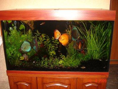 Мои аквариумы Алексей7  - DSC06157.JPG