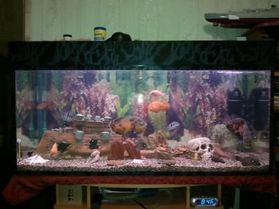 Мутная вода в аквариуме, муть в аквариуме - 17022012110.jpg