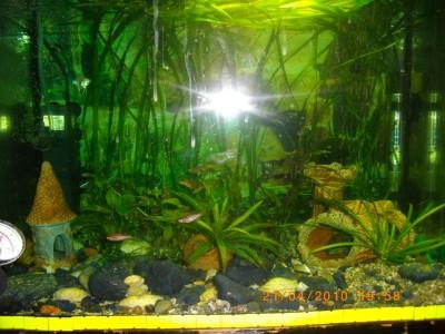 Мой аквариум 50 литров nikitos  - IMGP0371.JPG