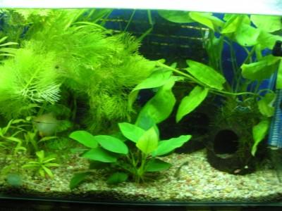 Мой аквариум 200 литров Dasha  - 1.JPG