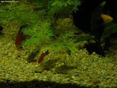 Мой аквариум 200 литров Dasha  - 3.JPG