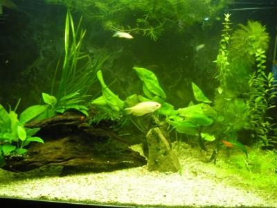 Мой аквариум 200 литров Dasha  - 6.JPG