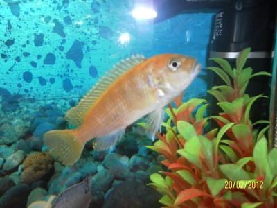 Помогите опознать рыбку опознание рыб  - SAM_1412.JPG