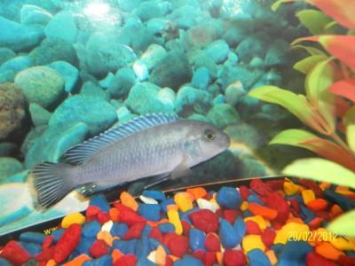 Помогите опознать рыбку опознание рыб  - SAM_1410.JPG