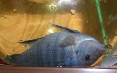 фото рыбы - SAM_0830.JPG
