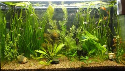 Мой аквариум 100 литров НастенА  - 002.jpg