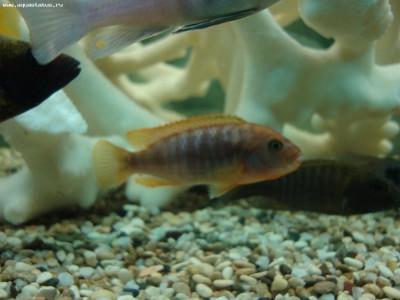 Помогите опознать рыбку опознание рыб  - DSC07673.JPG