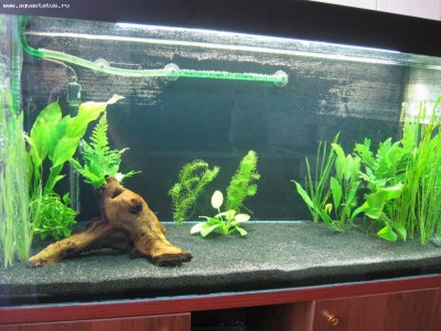 Мой аквариум 200 литров vodila  - IMG_2315.JPG