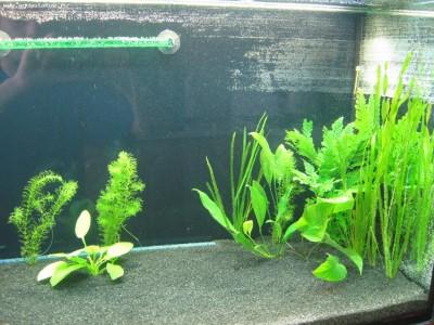 Мой аквариум 200 литров vodila  - IMG_2317.JPG