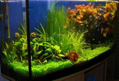 Аквариумные растения - опознание растений. - 21ecfb3c61e0.jpg