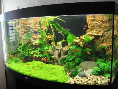 Аквариумные растения - опознание растений. - inter8-big.jpg