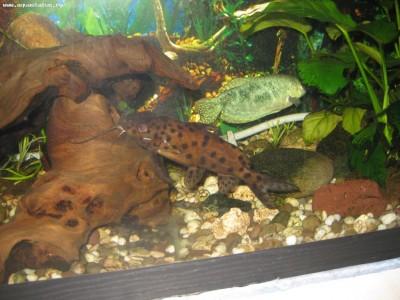 Помогите опознать рыбку опознание рыб  - IMG_3855.jpg